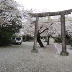 Himeji Shrine - Kirschblütenschnee