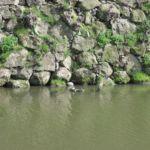Wilde Schildkröten :)