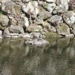 Mehr Schildkröten