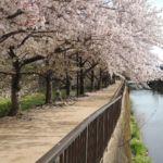 Sakura :)