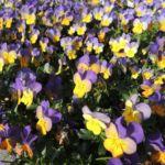 Botanischer Garten Himeji
