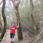 Wanderweg mit Phogl