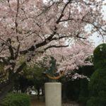 Sakura in Hiroshima